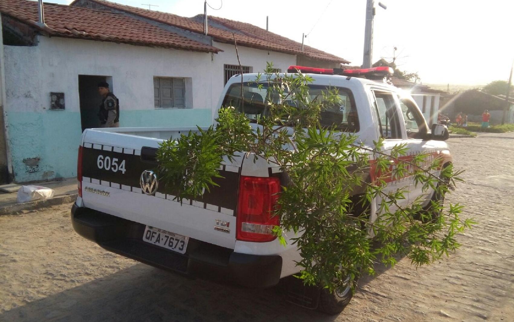 Durante a operação a polícia apreendeu três plantas semelhantes a maconha (Foto: Volney Andrade)